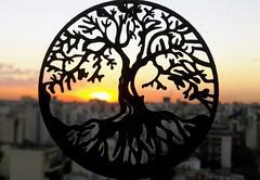 A través de la luz (Martín Papi) Tags: sol ocaso puesta atardecer sunset anochecer poniente