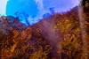 20171031-141 (sulamith.sallmann) Tags: landschaft natur pflanzen blur botanik effect effekt farn filter folie folientechnik italia italien italy landscape messina nature pflanze plants sicilia sizilien unscharf it sulamithsallmann
