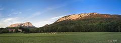 Arripozueta (Jabi Artaraz) Tags: jabiartaraz jartaraz zb euskoflickr arripozueta olaeta aramaio aramaiona araba anboto orixol orisol montaña valle vacas hierba pradera prado nature natura paisaje landscape