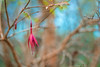 Structure (- A N D R E W -) Tags: macro flower plant shrub tree bush branch leaves fuschia red blue flor arbol ramas hojas rojo azul nature natureleza dof depth field bokeh twigs sony mirrorless full frame ilce7rm2 a7rii alpha emount winter invierno vintage old antique viejo manual focus
