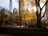 Central Park (Web-Betty) Tags: nyc newyork newyorkcity manhattan city urban bigapple centralpark park trees yellow