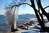 The saddest tree on Lake Michigan (Andy Marfia) Tags: evanston il northwesternuniversity chicago skyline tree lakefront lakemichigan frozen winter ice snow waves rocks sony rx100 1640sec f8 iso125