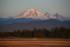MOUNT BAKER AS SEEN FROM ABBOTSFORD AIRPORT, BC. (vermillion$baby) Tags: abbotsfordairshow mountbaker abbotsford milllake winter december nature bc mountain snow cascades washington usa fraservalley trees tree beautifulbc