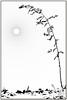 winter (firstlookimages) Tags: nature natureportrait monochrome minimalism winter highcontrast bw blackandwhite blackwhite art artistic artisticmanipulation abstractnature digitalmanipulation digitalart digitalphotography detail
