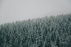 """she's a griever, my believer; it's not a fever, it's a freezer; i believe her, and i'm a griever now."" (lina zelonka) Tags: oberhof germany thüringerwald thuringianforest linazelonka wald woods forest winter schnee snow trees bäume nadelbäume december dezember thüringen thuringia thueringen thuringen deutschland nikond7100 18105mm foggy misty neblig diesig moody"