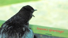 WBY4010-7 G7 Season's Greetings! (wbyoungphotos) Tags: goodtiding good tiding bird seasons greeting seasonsgreetings g7 wbyoungphotos new year