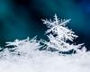 Precarious (LadyBMerritt) Tags: snowflakes icecrystals dendrites m macro blue green winter