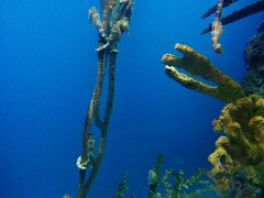 Seahorse (1) #toronto #ripleysaquarium #aquarium #fish #seahorse #latergram (randyfmcdonald) Tags: fish ripleysaquarium latergram seahorse aquarium toronto