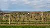 Vineyards and Horní Věstonice (Szymon Simon Karkowski) Tags: outdoor vineyards horní věstonice landscape sky clouds palawa moravia czech republic nikon d5100