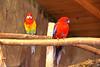 IMG_3224_copy (sinanaydin.net) Tags: eskişehir park hayvanat bahçesi zoo sazova animal
