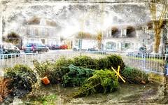 Noël c'est fini. (*Jost49*) Tags: vieurbaine urbanlife noël christmas xmas sapin christmastree déchet waste france paysdelaloire texture canoneos70d canonef1635f4lisusm