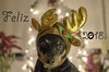Happy new year everyone! (crisgarr) Tags: dog portrait christmas navidad luces lights 2018 noel weihnachten pinscher pinscherminiatura miniaturepinscher minipin chien cane hund