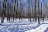 Promenade, Parc du Lac Beauchamp en Hiver, Gatineau, Canada - 4134 (rivai56) Tags: promenade parcdulacbeauchampenhiver gatineau canada sonyphotographing québec ca sentier trees forest winter