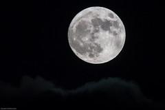 New year - full moon (mfhunter) Tags: moon d500 newyear fullmoon wolfmoon
