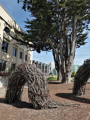 San Francisco, CA, University of San Francisco, Twig Sculptures (Mary Warren 13.5+ Million Views) Tags: sanfranciscoca universityofsanfrancisco architecture building school jesuit university education nature flora tree art wood sculpture branches twigs