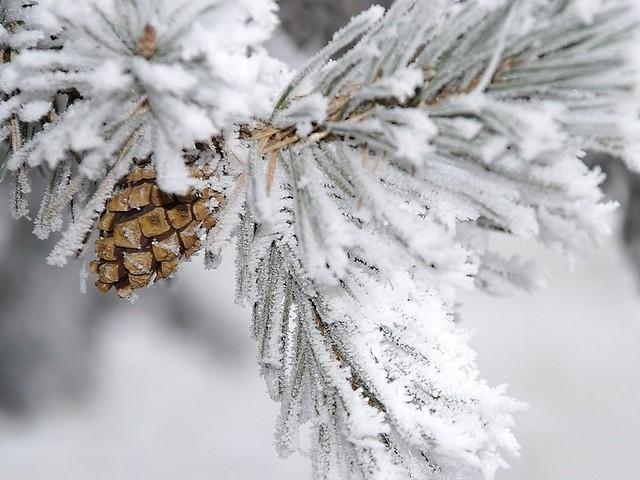 Выходные вСамаре иобласти ожидаются снежные итеплые