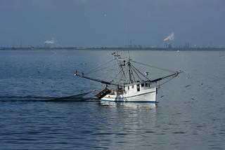 Fishing boat , bird and fish