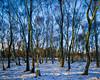 Alive in the Snow - Stanton Moor Birches (CactusD) Tags: snow stantonmoor birch trees woodland derbyshire peakdistrict peak district nationalpark england uk unitedkingdom gb united kingdom greatbritain great britain 5x4 4x5 linhof technikardan tks45 s45 largeformat large format schneidersupersymmar110mmxlf56 supersymmar 110mm f56 film fujifilm fujichrome velvia50 velvia tetenal e6 homedeveloping homeprocessed jobo cpe3 tilt shift tiltshift movements pce 85mmf28pce 85pce 85mm f28 fx nikon d800e