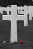 """Cette rose rouge """"sang"""" ... tout un symbole ! (jipebiker) Tags: cimetière américain tombe croix 2èmeguerremondiale tomb 2ndworldwar remember souvienstoi normandie normandy france collevillesurmer americancemetery cimetièreaméricain"""