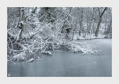 Downfall (Stuart Leche) Tags: northamptonshire scenic snow trees winter woodland canal wood wwwstuartlechephotography
