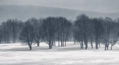 Winter Shadows (Appalachian Hiker) Tags: tree snowfall snow winter light shadow monochrome ridgeline mountains