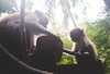 Monkeys (Tristan Orenes) Tags: thailand asia travel trip adventure summer light sun visiting sky photography pictures life dream