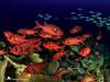 Palau 2017 (Agnieszka Adamczyk) Tags: scubadiving scuba ocean marinelife fish epl5 olympus palau divingtrip diving fotosub sealife tauchen wetpixel underwaterphotography underwater