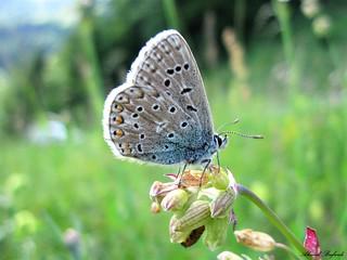 Butterfly 1531