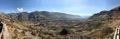 IMG_4476 (2) (massimo palmi) Tags: perù canyon colca condor colcacanyon cocariver arequipa colcavalley terrace terraces steppedterraces ande andeancondor