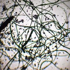 acrylic fiber (photobeam ( Better grays through research © )) Tags: acrylic fiber microscope