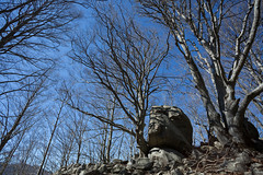 2016-03-08 - 20160308-018A1381 (snickleway) Tags: canonef1740mmf4lusm france céret languedocroussillonmidipyrén languedocroussillonmidipyrénées fr