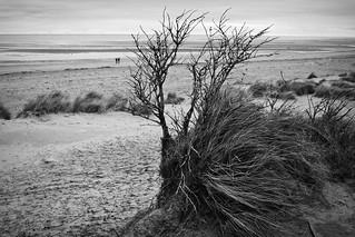 Low Tide Path