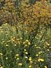 australian national botanic garden-19 (billdoyle[mobile]) Tags: australiannationalbotanicgarden act garden botanicgarden australia australiancapitalterritory anbg canberra australian billdoyle canberratripdec17jan18