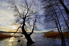_MAL3356 (Markoliini) Tags: nikon d800e tamron 1530 landskap landscape maisema luonto natur nature puu trä is jää lake järvi sjö