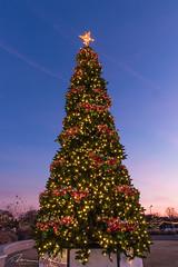 Christmas Tree-2.jpg (McMannis Photographic) Tags: christmas lights star rock hill fountain park 2017 christmastree photography night astronomy