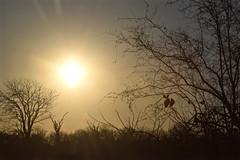 A New Park: A New Sunrise (The Spirit of the World) Tags: southafrica africa safari landscape morning sunrise sun light dawn bushes ridge nature rays