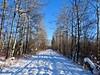 Weaselhead Trail, Calgary (benlarhome) Tags: weaselhead calgary alberta canada path pathway trail crosscountryski hike hiking