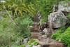 Im botansichen Garten (waynorth) Tags: botanischergarten grancanaria laspalmas pfad grün spanien