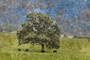Three Cows Under a Tree (LarryHB) Tags: 2015 adventure agriculture colorimage connection countryside cows farm field hiking horizontal landscape midwest missouri nature nopeople ourdoors pastures photography rural scenics scottcounty sky summer tranquility tree