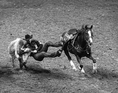 0246937398-95-Cowboy Steer Wrestling at the 2017 National Finals Rodeo-2-Black and White (Jim There's things half in shadow and in light) Tags: 2017 america american lasvegas nfr nationalfinals nevada rodeo southwest thomasandmack usa unitedstates action animal cowboy december sports western horse steerwrestling blackandwhite