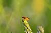 DSC_8903 (jozsef.fay) Tags: hely itthon köncsög rovar tücsök állat
