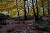 Muy cerca (SantiMB.Photos) Tags: 2blog 2tumblr 2ig fotohiking urederra nacederodelurederra urbasa río river otoño autumn geo:lat=4280401427 geo:lon=213489141 geotagged baquedano navarra españa esp