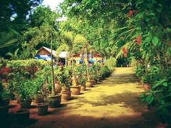 Taman Botanikal, Ayer Keroh - Melaka - http://4sq.com/s1fAIm #green #nature #tree #grass #travel #holiday #holidayMalaysia #travelMalaysia #Asian #Malaysia #Malacca #大自然 #草 #树木 #旅行 #度假 #马来西亚旅行 #马来西亚度假 #亚洲 #马来西亚 #发现马来西亚 #发现大马 #自游马来西亚 #马六甲 #flower #花 #花草树木