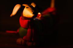 [100/365] (massi2403) Tags: candlelight day100 macro dachshund candle macromonday