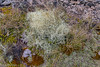 171216 112846 (friiskiwi) Tags: 1670m 5500feet atthetop lichen awaterevalley marlborough newzealand nz