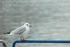 (Laetitia de Lyon) Tags: fujifilmxt10 lyon oiseau bird mouette seagull