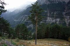 En pleno Pirineo Aragones (Nikonista Spain) Tags: spain españa espierba huesca bielsa aragon pirineos pirineoaragones montañas naturaleza nieve nikon landscape arboles vegetacion