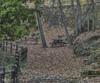 Descanso en Otoño (pedroramfra91) Tags: otoño autumn exteriores outdoors jardín garden arboles trees banco naturaleza nature