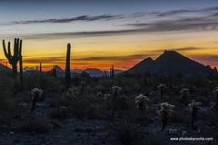 Sunrise (doveoggi) Tags: arizona scottsdale mcdowellsonoranpreserve desert sunrise saguaro mountain landscape