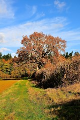 Autumn Path (Martin Pettitt) Tags: 2017 autumn burystedmunds dslr littlewhelnetham nikond90 november outdoor path suffolk uk